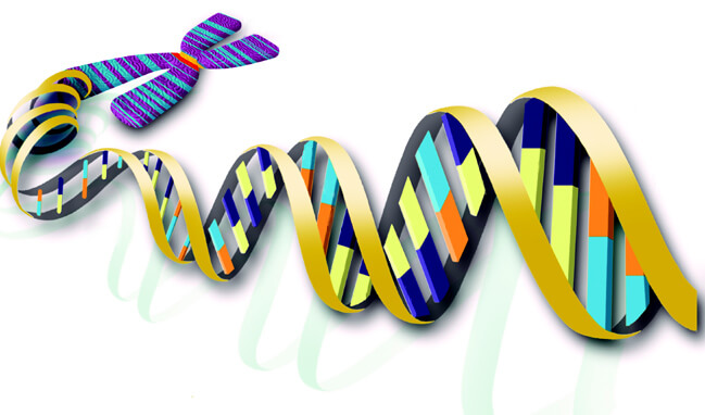 Specializing in fast and cheap biochemistry document translation in Ho Chi Minh City