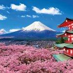 Top 05 Công Ty Dịch Thuật Tiếng Nhật Tại Đà Nẵng 21